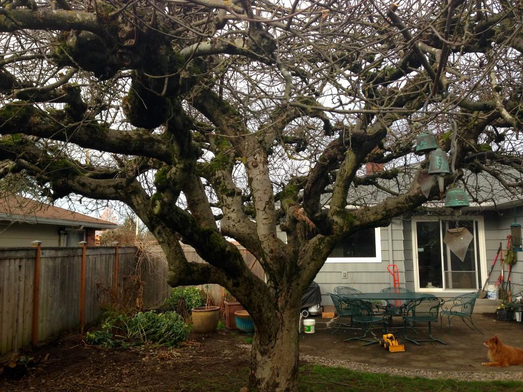 Een prachtige stam van een appelboom met zijn zij-armen