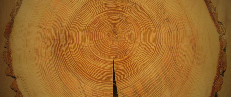 De jaarringen van een boom vertellen de geschiedenis van de betreffende boom.