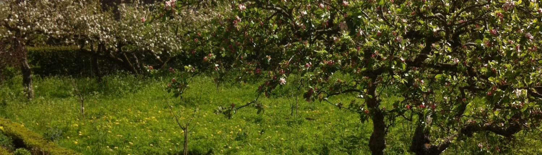9/9 Het hout is afkomstig uit de historische appelboomgaard van Slot Zuylen