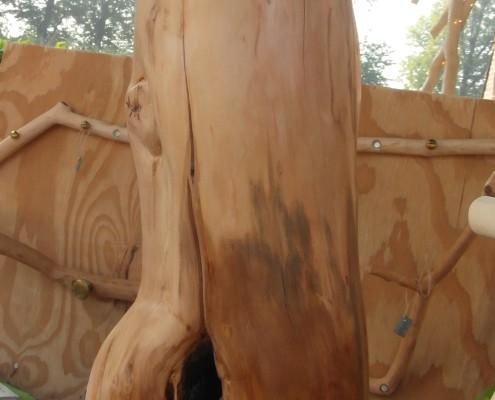 Het onderste gedeelte van de stam heeft een donkere kleur